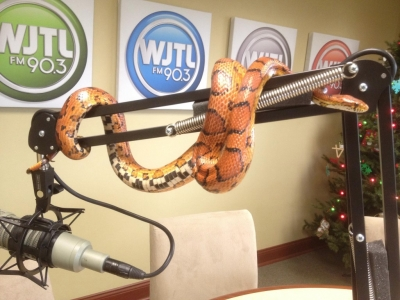 WJTL 90.3 Kids Cookie Break Forgotten Friend Reptile Sanctuary corn snake Jesse Rothacker