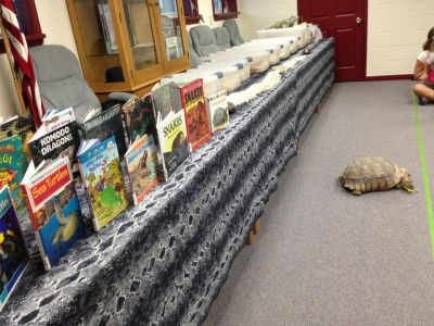 Tortoise Library Forgotten Friend Reptile Sanctuary