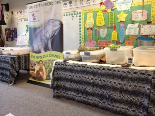 Reptile classroom setup