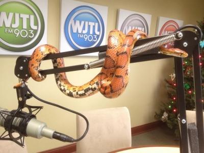 WJTL 90.3 Kids Cookie Break Forgotten Friend Reptile Sanctuary corn snake Jesse Rothacker